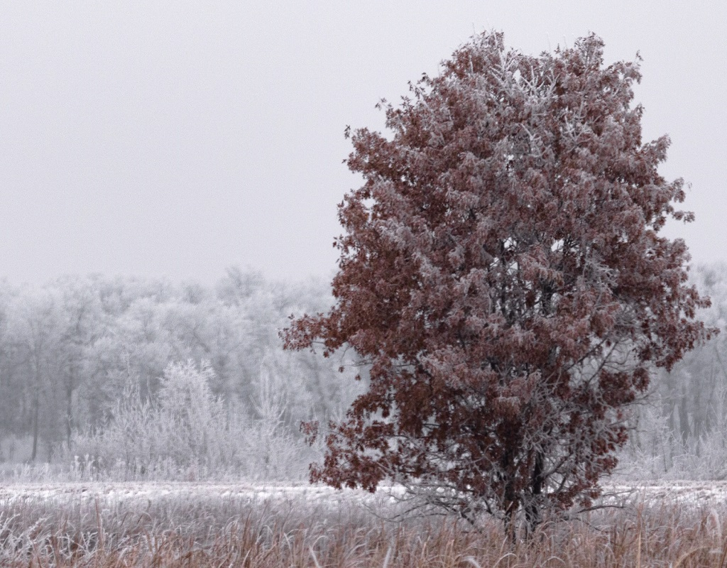 Winter Paper Conditioning in the Upper Midwest
